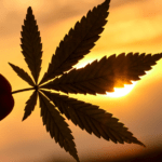 CBD vs. THC – What You Need to Know