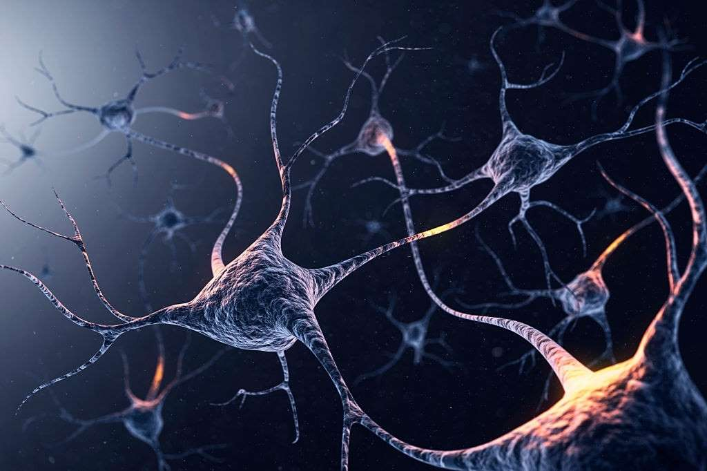 Endocannabinoid System, Endocannabinoid System – A Complete Guide to its Functioning, #1 USA Cannabidiol Blog