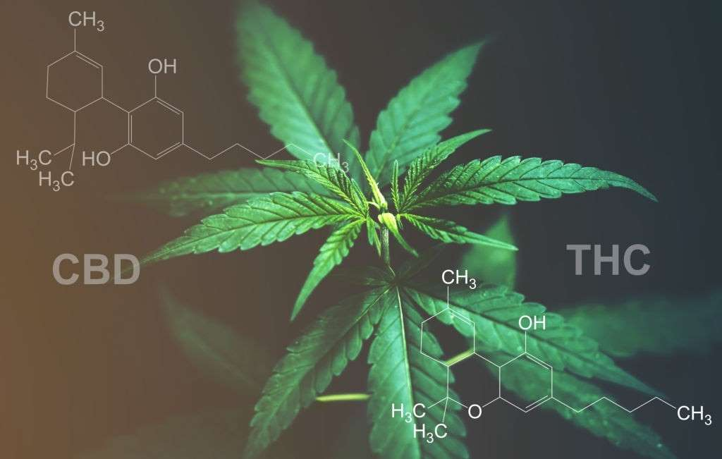 CBD Oil Without THC, CBD Oil Without THC – Should You Even Consider Buying It?, #1 USA Cannabidiol Blog