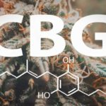 CBD VS CBG – What's the Difference Between these Cannabinoids?